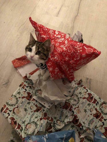 cat wears pile of wrapping paper on back