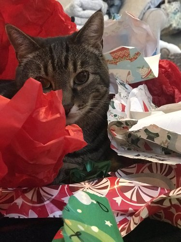 cat hiding in wrapping paper