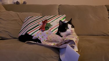 cat naps in pile of wrapping paper