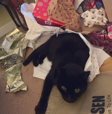 black cat freaking out in wrapping paper