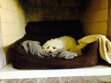 cozy dog in bed in non-working fireplace