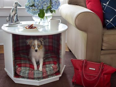 dog in dog nook underneath table