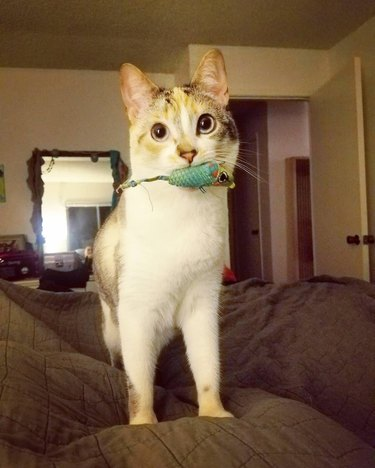 Cats making fetch happen