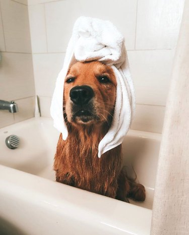 dog in bath tub with towel on head