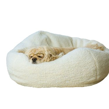 dog sleeping on Pet Personalized Sherpa Buff Ball Pet Bed
