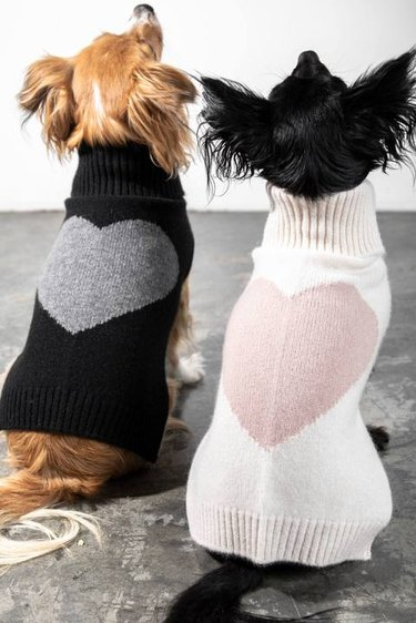 two dogs in heart sweaters