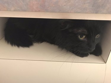 cat hides in slot from veterinarian