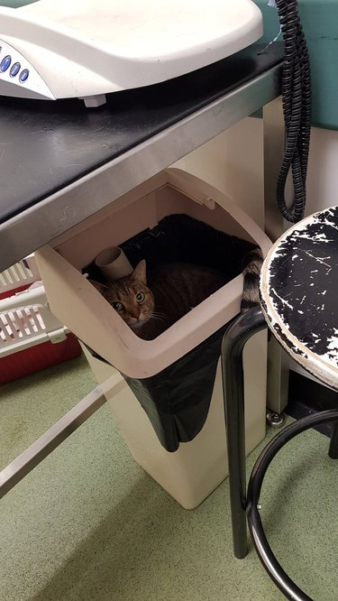 cat gives vet tech the slip by hiding in trash can
