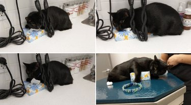 black cat tries to blend in with black phone cords