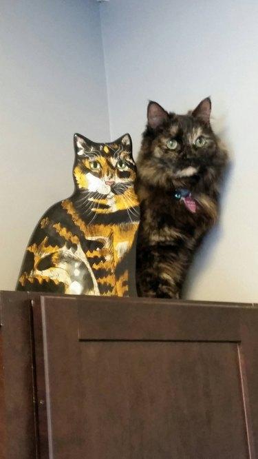 cat sits next to plush cat