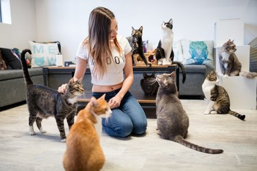 Cats spend time with CatCafe Lounge volunteer.