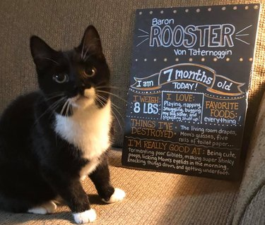 cat stands next to funny chalkboard