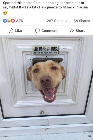 Dog sticking its head through cat door underneath Beware of Dog sign