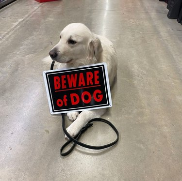 Dog posing with Beware of Dog sign