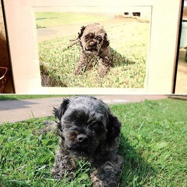 dog in grass with his custom portrait