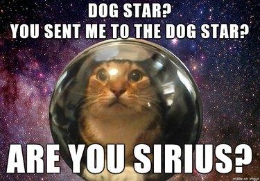 Cat in an astronaut helmet