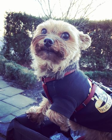 214 Yorkie names for male & female dogs