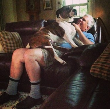 20 people who said they didn't want pets