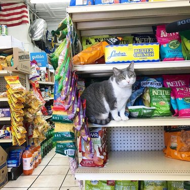Cat on a shelf of chips