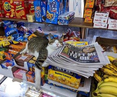 Cat sleeping on newspapers