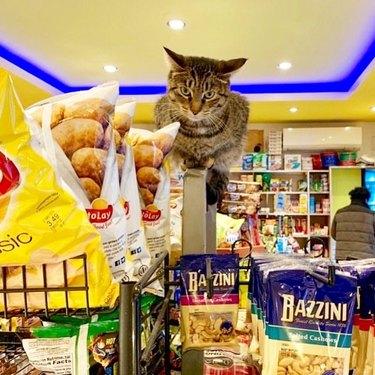 Cat supervising shelf of chips