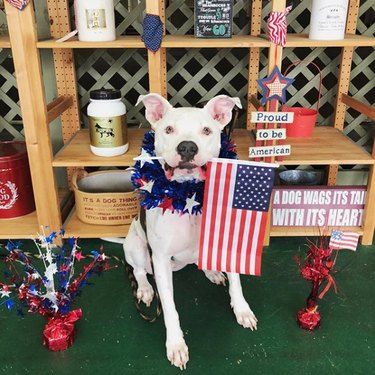 dog sitting next to Proud to be an American sign