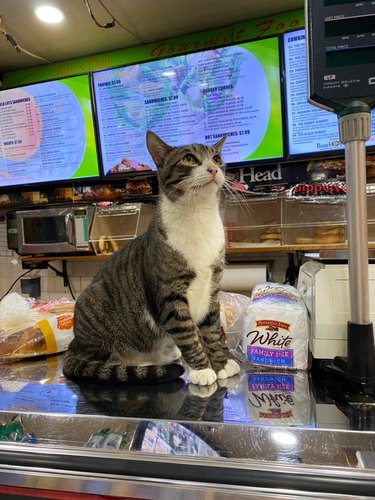 Cat sitting on deli counter