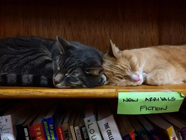 """Two cats sleeping on a shelf labeled """"New Arrivals Fiction"""""""