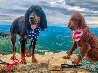 two dogs wearing stars and stripes scarves