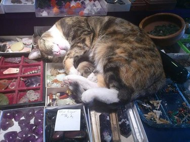 Cat laying on display of crystals