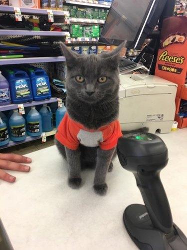 Cat at cash register
