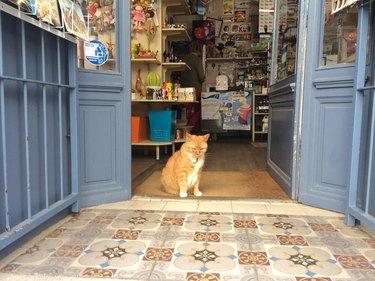 Cat in open door to shop