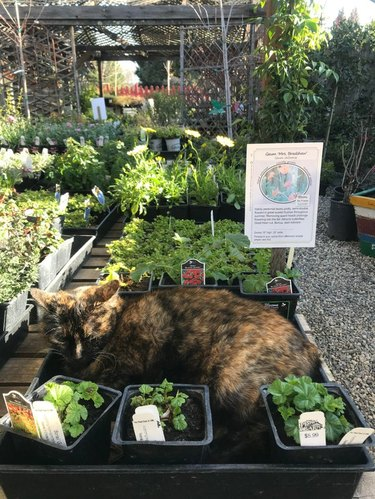 Cat sleeping in display of potted herbs