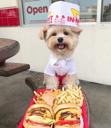 tiny dog dressed in an In 'N' Out uniform smiles at a tray full of fries and two double double cheese burgers.
