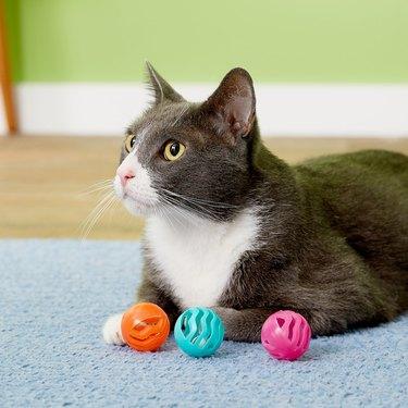cat plays with plastic balls
