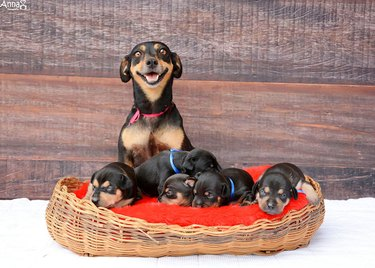 Dog with puppies.