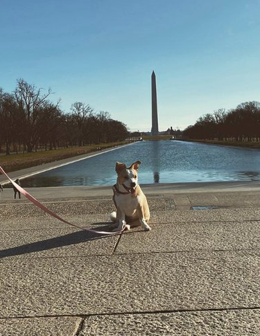 dog by the Washington monument in D.C.