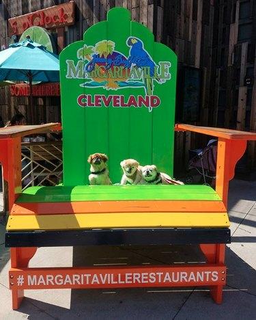 dogs in margaritaville