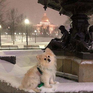 dog in snow in Boston