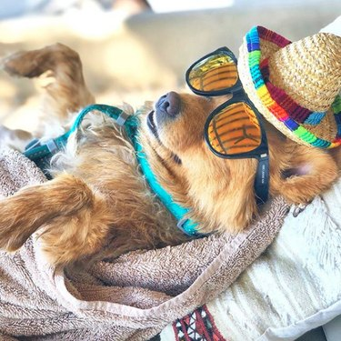 dog lying on beach in sunglasses