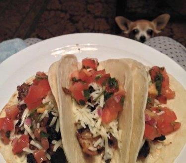 Dog looking at tacos