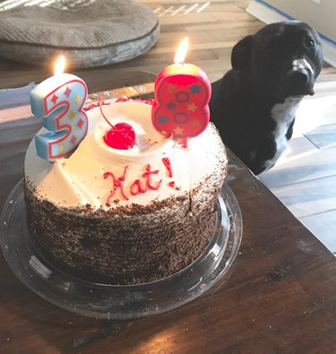 Dog looking at birthday cake with candles