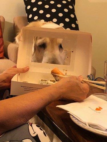 Dog looking at box of sushi