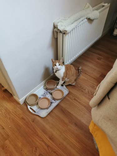 cat sits next to 4 empty bowls