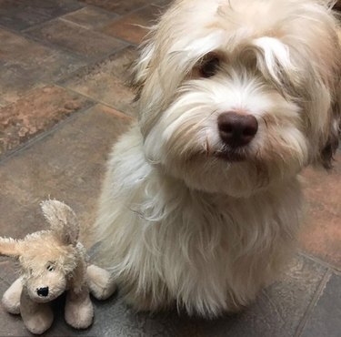 a dog with a lookalike toy
