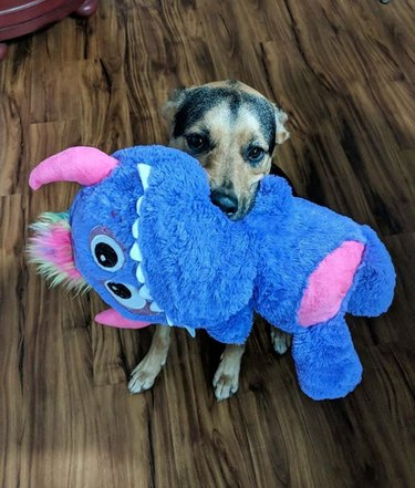 a dog with a giant purple monster toy bigger than itself