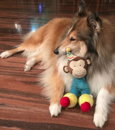 a dog with a monkey toy
