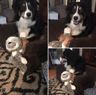 a dog with a stuffed sloth toy