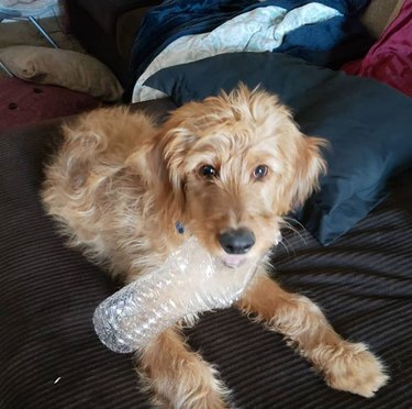 a dog with a plastic water bottle