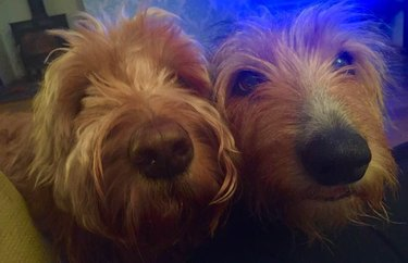 Two dogs with their noses close to the camera